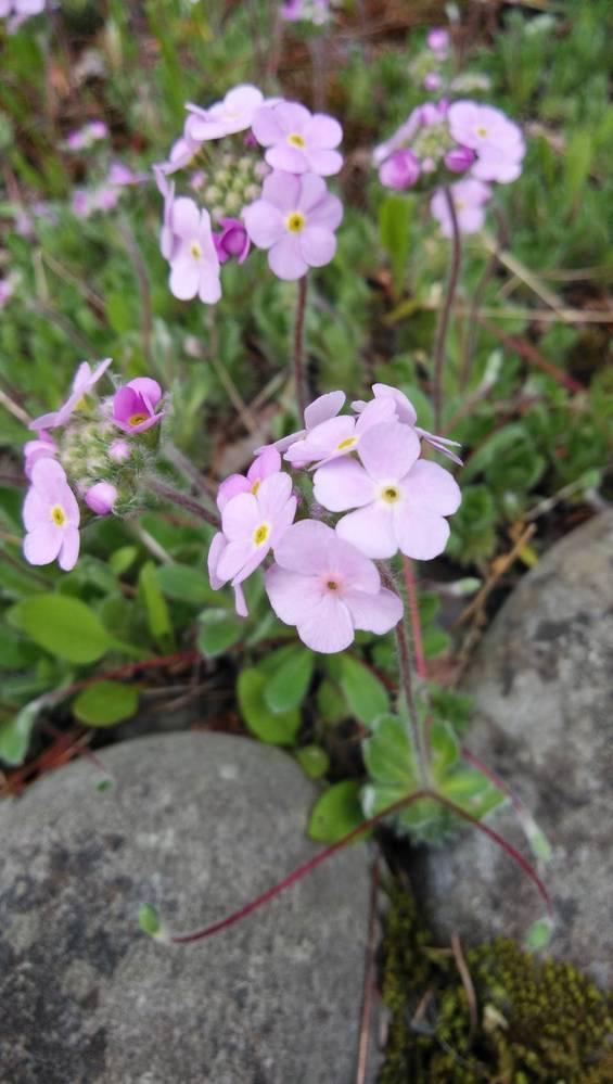 花の名前を教えてください。 先日、近くの公園で咲いていた花なのですが、名前がわからなくて困っています。 ご存じの方がいらっしゃいましたら、ご教授いただけるとありがたいです。