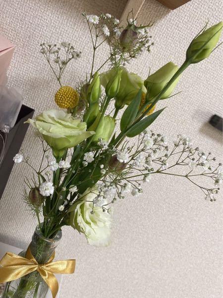 この花の名前分かる方いますか? 花言葉を検索したいのでどなたか詳しい方いましたら教えて頂きたいです。