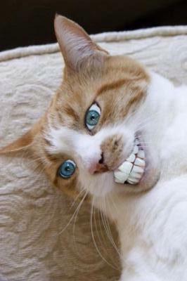 朝、目が覚めて、この猫が目の前にいたら、皆様はどうしますか?