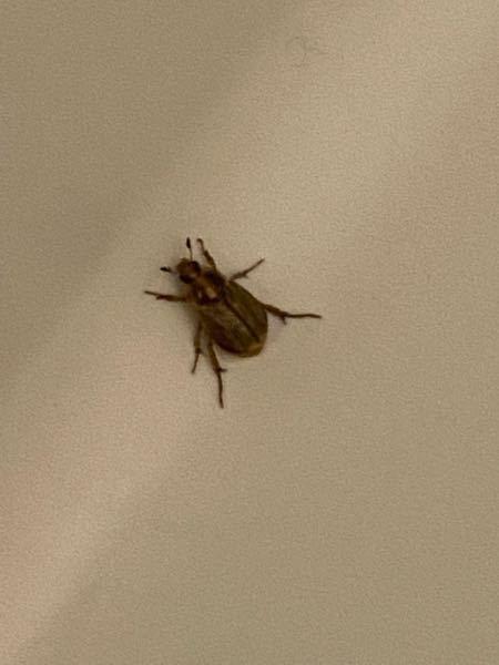 家の風呂場にこんな虫いました。 この子は何?害虫ですか?