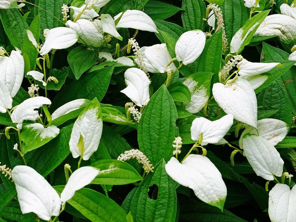 この花の名前を教えてください。 宜しくお願いします。