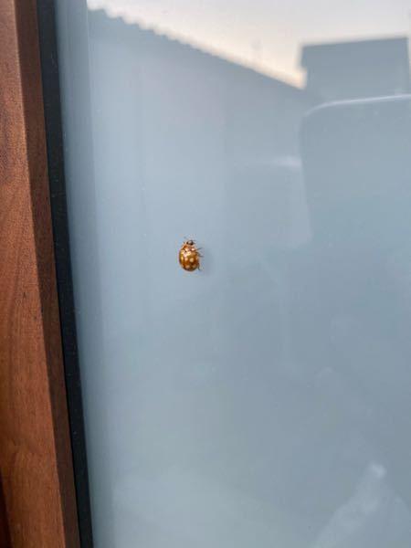これは何と言う虫ですか?