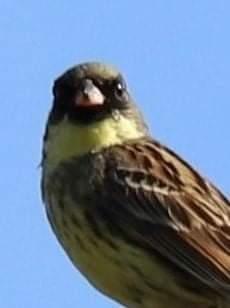 これは何という種類の鳥でしょうか?