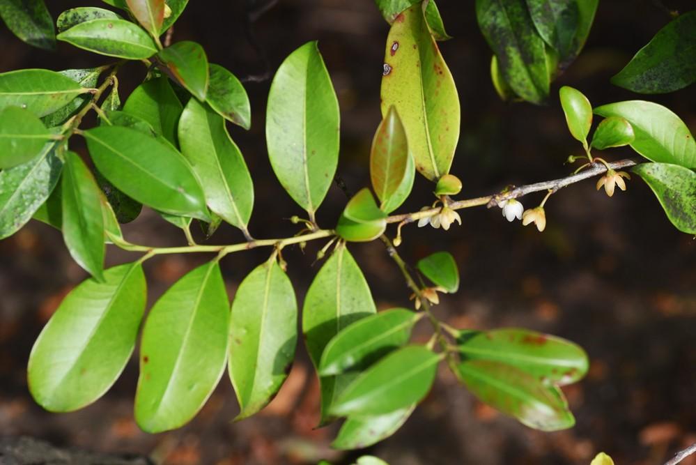 この木の名前を教えてください。よろしくお願いいたします。