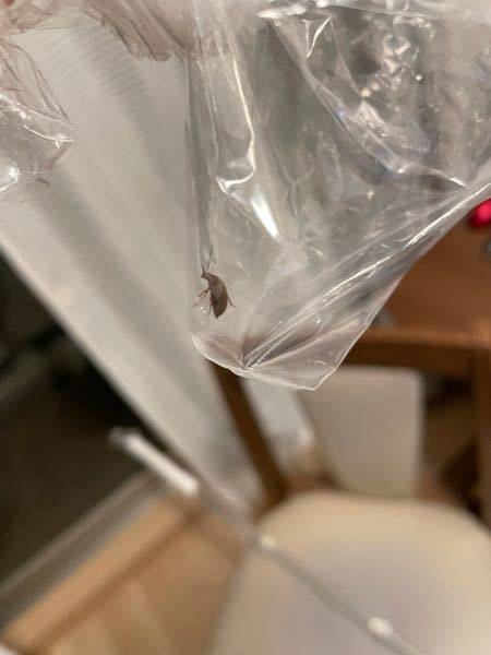 なんの虫か教えて欲しいです