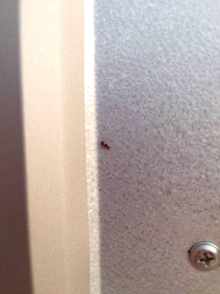 この虫の名前がわかる方いらっしゃいますか? 新しく小屋を建てたばかりなのですが、この虫が大量にいて困っています。 アリくらいのサイズで小さいです。体の真ん中がオレンジ色をしています。飛ぶのでアリではないと思うのですが…。 殺虫剤で退治できるのでしょうか? 教えていただけると助かります。