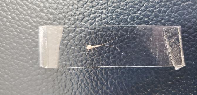 この虫のなまえを教えてください