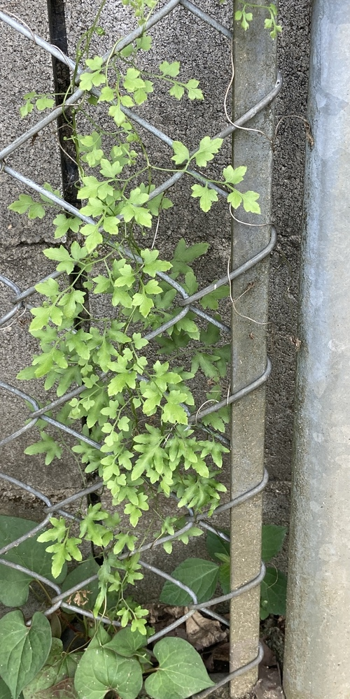 この植物は何でしょう?