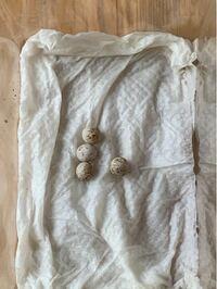 自宅の植木鉢に丸い卵が有りました。 これは何の卵か分かりませんか? 丸すぎる気がします。