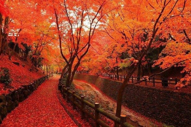 秋に似合う曲・秋に聴きたい曲を教えて下さい。
