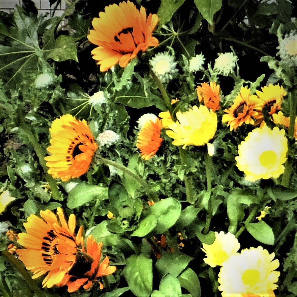 この花の名前教えて下さい60