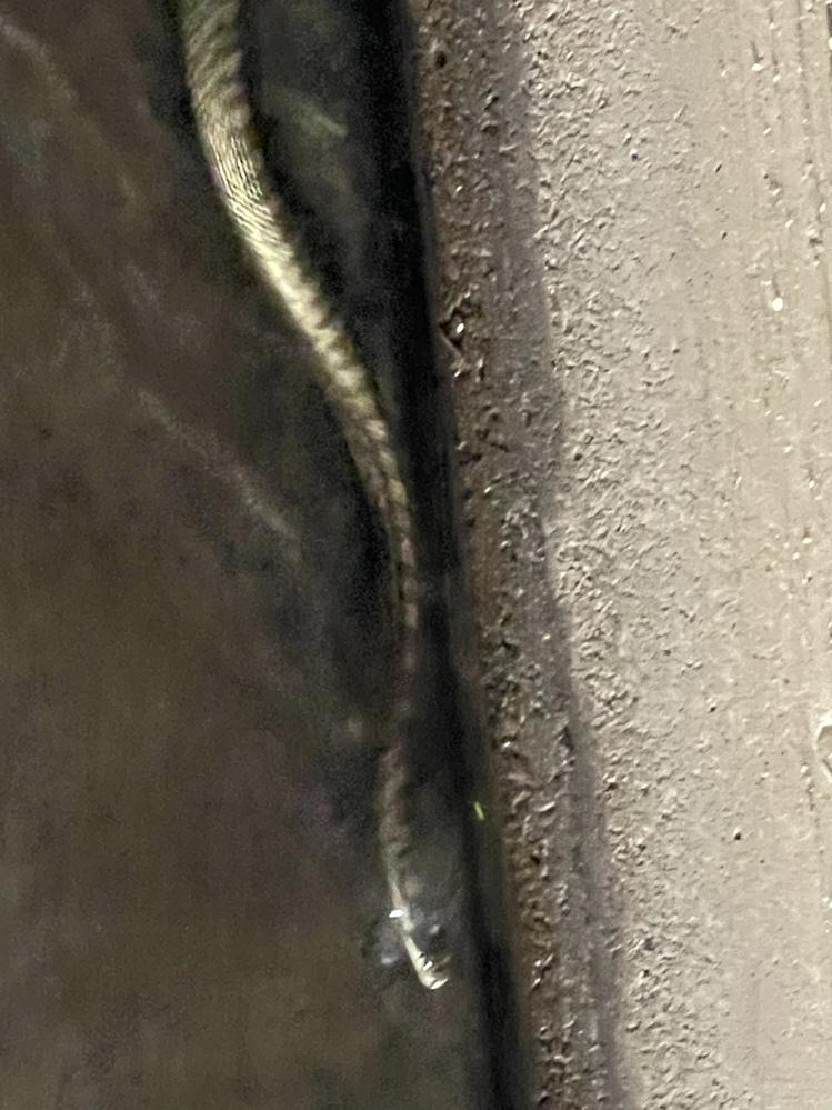 家の近所で泳いでいました。なんという蛇ですか?また毒はありますか?教えてください!