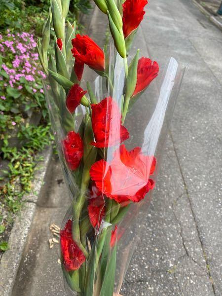綺麗な花が売っていましたが、なんていう花かわかる方いませんか??