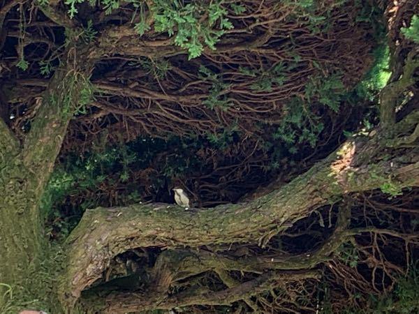 この野鳥の名前を教えて下さい。