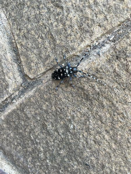 家の壁に付いてたんですけど何虫ですかこれ