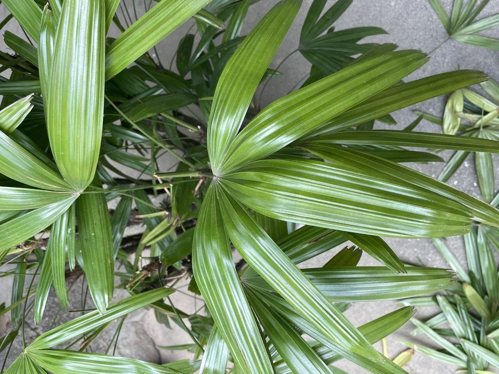 この植物の名前を教えて下さい。よろしくお願いします。