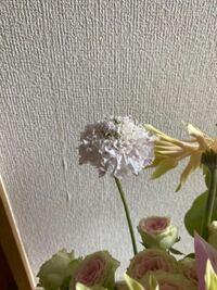 このお花の名前わかる方いますか? 5文字だったとおもいます!