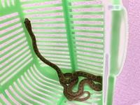 我が家の駐車場にいました… これ蛇ですか?マムシ? 毒があるのか知りたいです… わかる方よろしくお願いします めっちゃでかいミミズみたいに見えるけどめっちゃ細い蛇みたいなやつです。舌をぺろぺろ出してます