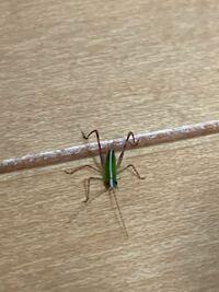 この虫知っている方いらっしゃいますか?