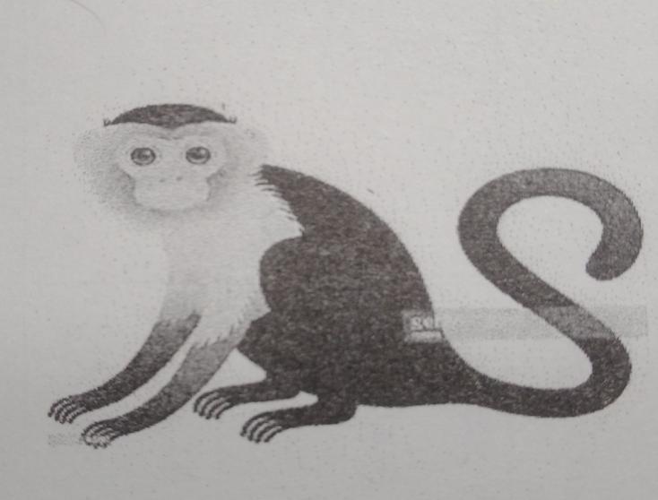 【至急】画像の動物の名前を教えてください!