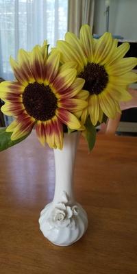 小さいヒマワリのような花を頂きました。 何と言う花でしょうか? また切り花ですがとても気に入ったので種を取ることが可能であれば今後育てたいと思っています。 可能でしたら植える時期、育て方なども教えて頂けると有りがたいです。