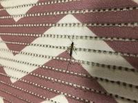 ※虫画像注意です。 家の中にこのお尻の針?が長いアリのような虫がよく出てくるのですが、一体この虫は何という虫なんでしょうか?ちなみに飛びます。 どうか詳しい方教えて下さい。