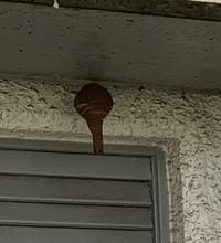 この蜂の巣は、なに蜂の巣ですか?