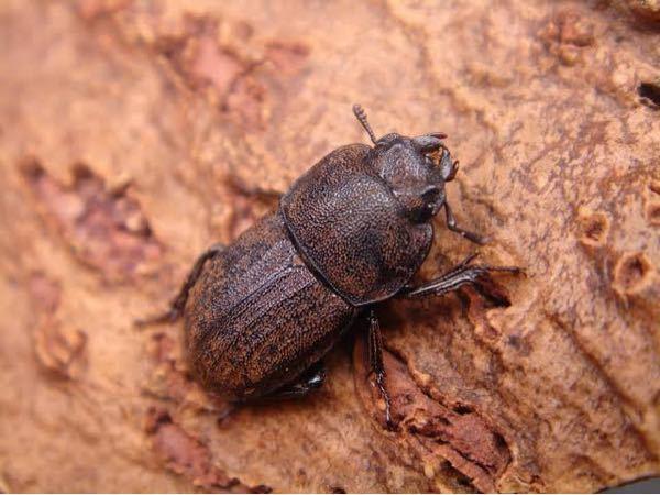 この昆虫の名前教えてください!