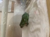このイエアメガエルちゃん昨日お迎えしたのですが端っこに行っては寝てます。全く動きません。でも掃除したりするときに掴んで移動させたりするとちゃんと動きます。大丈夫でしょうか