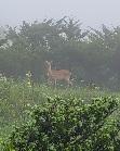 この動物は 鹿ですか!? 今朝 青森県 八戸市で撮影しました