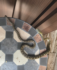 玄関に可愛い蛇がいたのですが、この蛇の種類が分かりません……アオダイショウでしょうか?ヤマカガシでしょうか? (関東住みです)