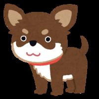 小型犬ってとてもかわいいですよね! もし小型犬を飼うとしたらどの犬種を飼ってみたいですか? https://news.yahoo.co.jp/articles/f37021104919ea3df75164c48d4a79f77b524ac9