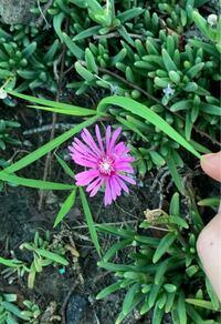 道端に生えていたのですが、この花の名前わかる方教えてください。
