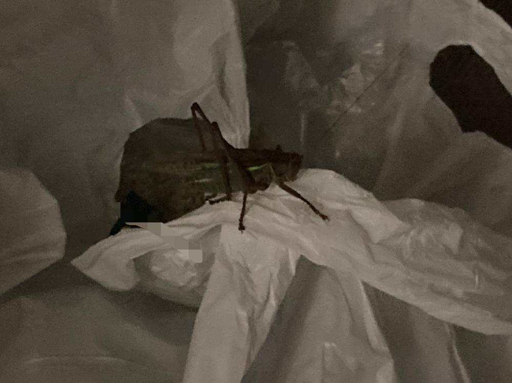 マンションの6階に住んでいる友達の家のベランダにキリギリス?みたいな謎の虫がいたのですが、どこから来たとか分かりそうな方いますか?一応これがその虫の写真です