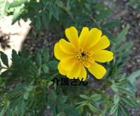 この花の名前は何ですか? 撮影日は2021年7月15日で撮影場所は兵庫県です。 よろしくお願いします。