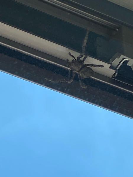 これは何のクモでしょうか??
