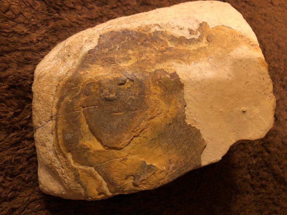 この石… 子供が何かの化石では⁇と河原で拾って来たのですが…画像検索をしてもいまいち解りません。 ご存知の方いましたら何か情報をいただけますでしょうか?よろしくお願いいたします。
