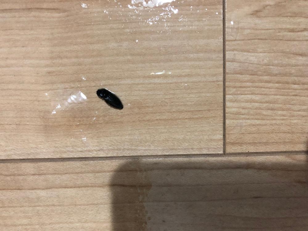 黒くて光沢はありません。 殺虫剤をかけた後です。 この虫は何でしょうか?