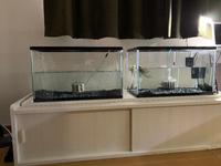 あなたなら何を飼育しますか? (何がおすすめ?)  60cm水槽 ヒーターなし エアレーション、フィルターあり 水位は低め(ふたをしないため)  ※片方の水槽はワイルドオスカー飼育水槽