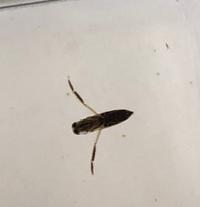 用水路で見つけました。 この生物は何ですか? 教えてください。