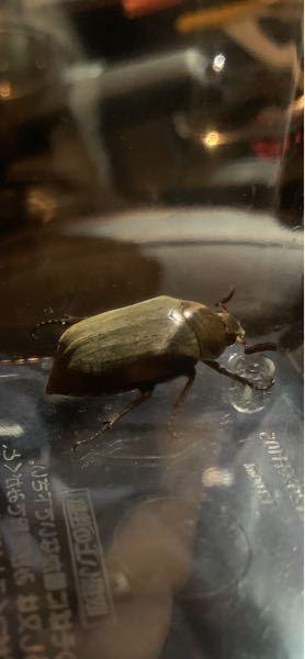 この虫は何という昆虫ですか?