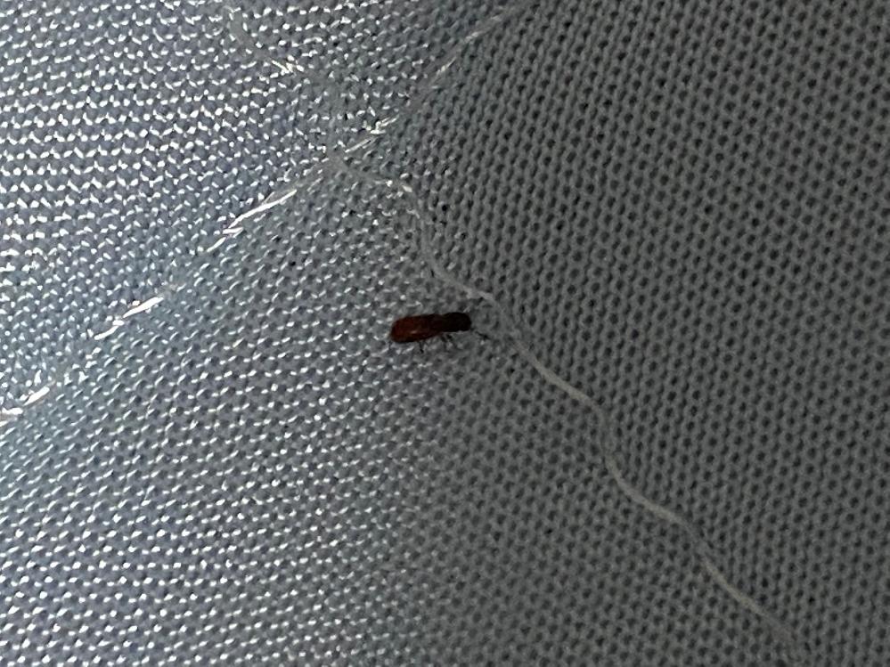 布団の上や床に最近現れます 何の虫かご存知の方いらっしゃいますでしょうか。暗くて見づらい画像で申し訳ありません。