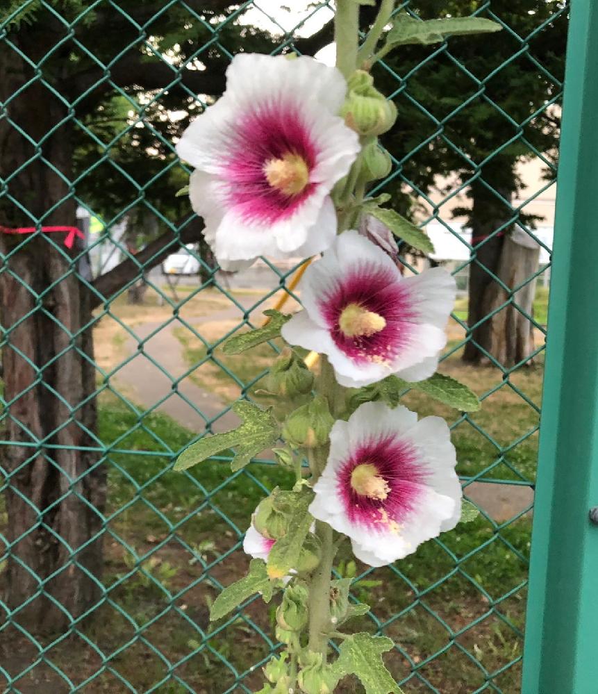 この花はなんて言う花ですか?