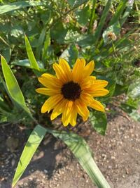このお花の名前わかる方いらっしゃいますか?