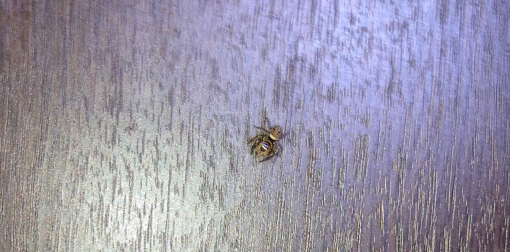 なんていう蜘蛛ですか?