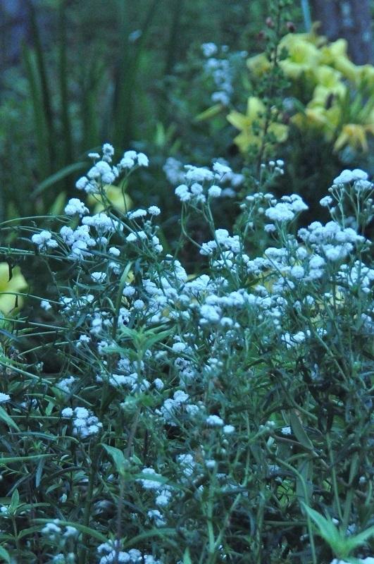 全体を撮りましので、 この花の名前を教えて下さい。