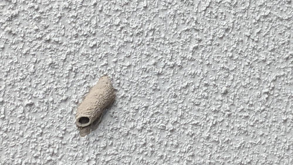 マンションの外の天井にこんなのができていました。これは何でしょうか?虫とかでしょうか?
