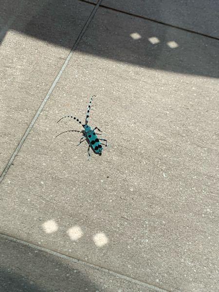 この虫の名前わかる方いらっしゃいますでしょうか? カミキリムシですかね?