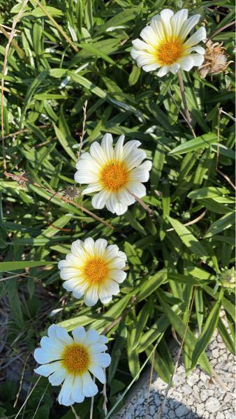 このお花の名前教えてください!