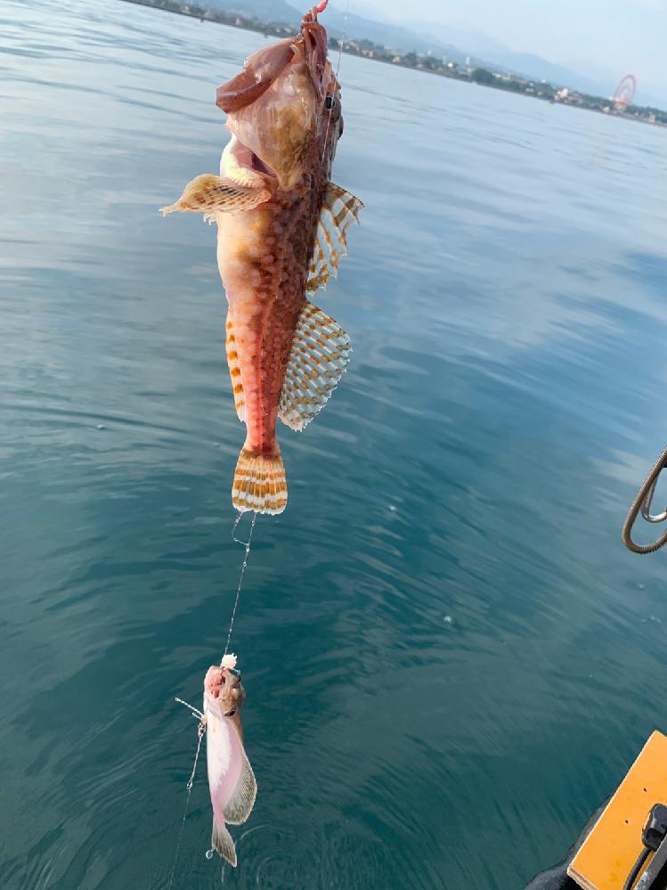 お願いします。 富山湾で釣り上げました。 てっきりカサゴだと思ってのでリリースしたのですが、後々に他のカサゴの写メと比べたらちょっと違う!って事に。 何でしょうか? 約25〜27センチくらいです。